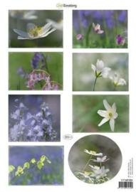 CraftEmotions Knipvellen voorjaarsbloemen 4 paars, blauw 117140/1004