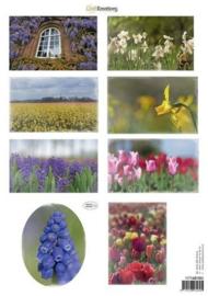 CraftEmotions Knipvellen voorjaarsbloemen 3 mix 117140/1003