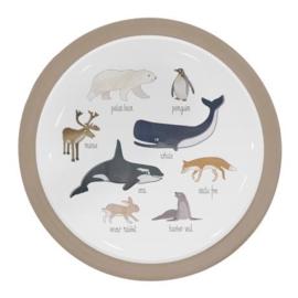 SEBRA BORDJE ARTIC ANIMALS