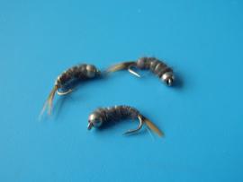 Grey Schrimp silverbeat