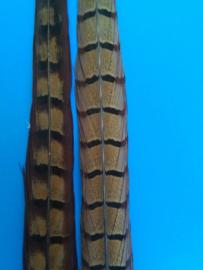 Fazantenstaart veer XL (50 cm)