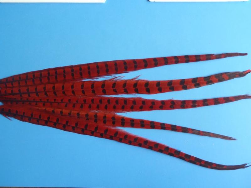 Fazantenstaart rood XL (50 cm)
