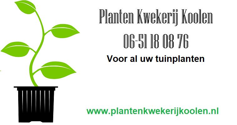 Plantenkwekerij Koolen