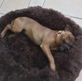 Comfortabel Huisdieren Bed