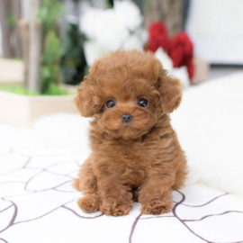 PupBuddy™ | Levensecht hondenvriendje
