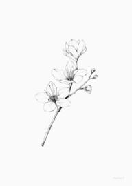 Kaart | Kersenbloesem | inkylines