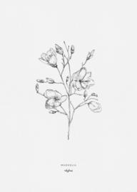 Kaart | Magnolia | inkylines