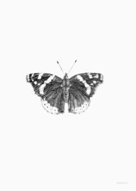 Kaart | Atalanta vlinder | inkylines