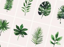 Kaartenset Tropical | 10 stuks | Dreamkey Design