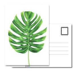 A6 (botanisch & natuur)