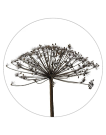 muurcirkel foto berenklauw - 40 cm