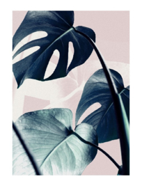 AW poster A4 - baja monstera