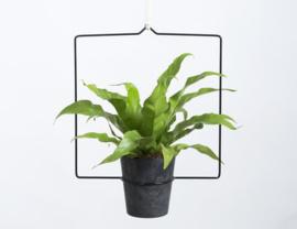 Plantenhanger Quadra zwart