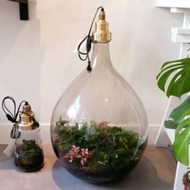 ecosysteem lamp Big Brother - Spruitje