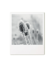 retroprint kaart - distel