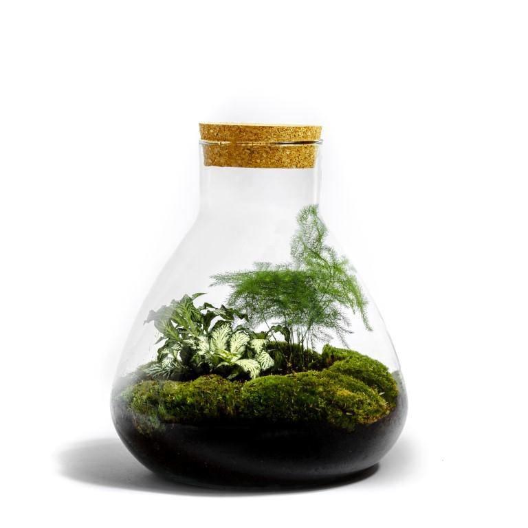 Erlenmeyer Medium terrarium - BOTANISCH