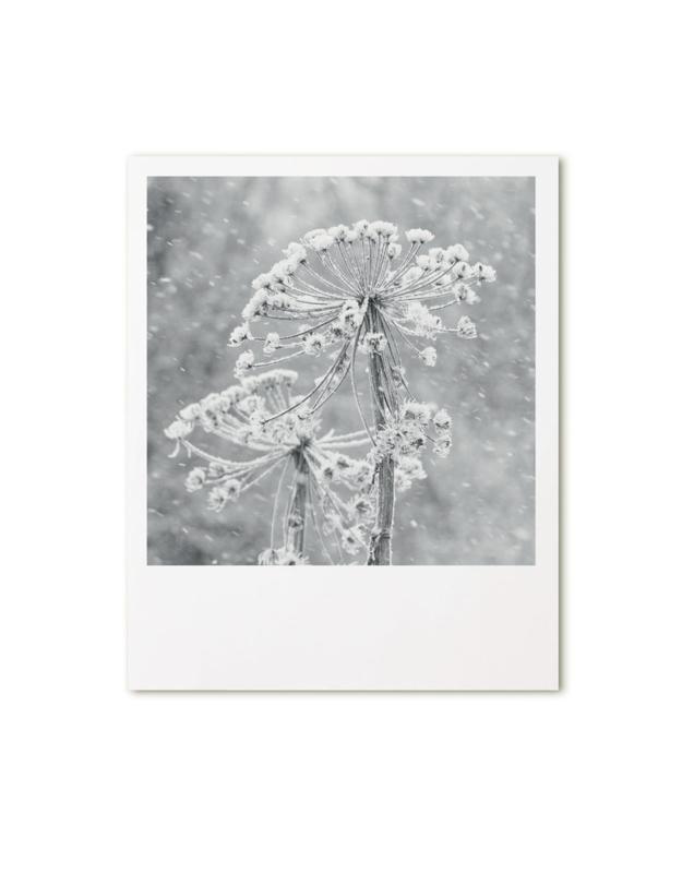 Retroprint poster 15x19cm - berenklauw met sneeuw