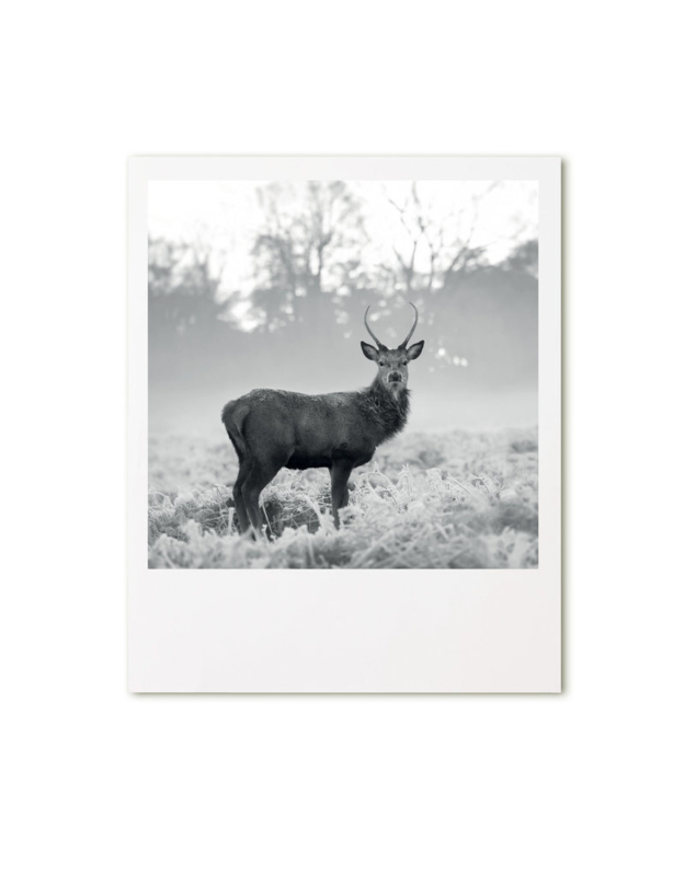 Retroprint poster 15x19cm - hert