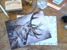 Postcard Edelhert