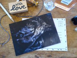 Postcard Black Horse