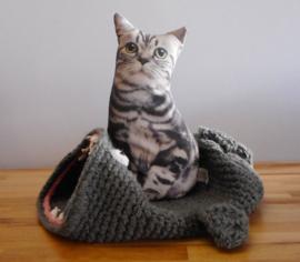 Katten manden