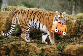 Trunki kinderkoffer Tipu tijger