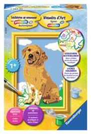 Schilderen op nummer lieve puppy