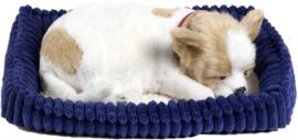 Perfect Petzzz hondje Chihuahua