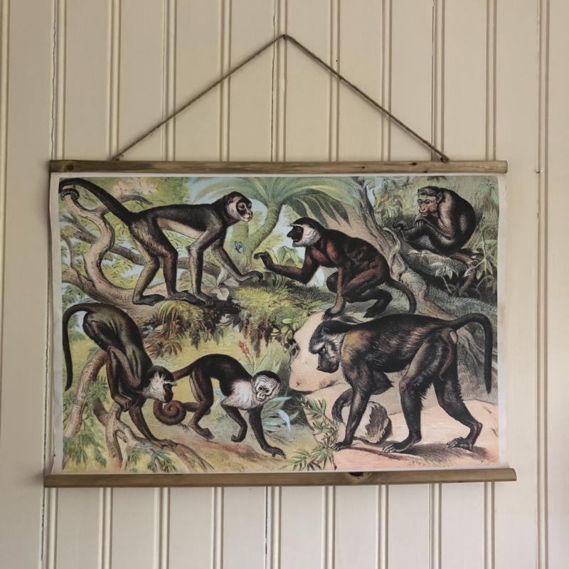 Oude schoolplaat apen