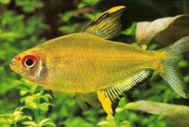 Vissen algemeen