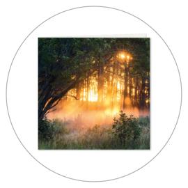 Wenskaart Forest Sunset