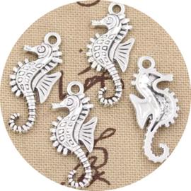 Seahorse 1st
