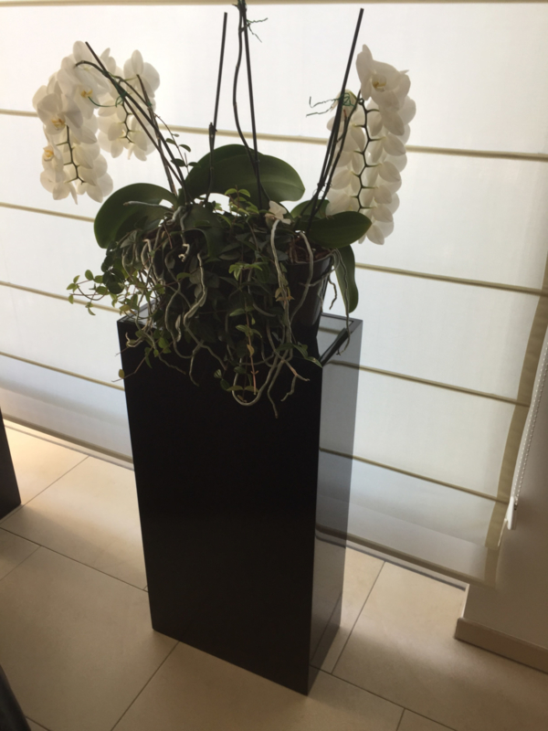 GM Schwarze Sockel - 30 cm x 30 cm x 100 cm (BxTxH)