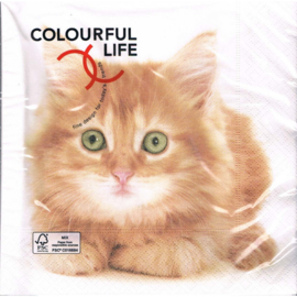 Colourful life Servetten 20 stuks 33 cm * 33 cm.  Poes