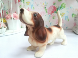 Vaga international Basset