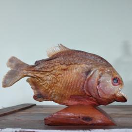 Opgezette Piranha (Serrasalmidae) - 20e eeuw