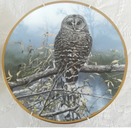 Spode - wandbord - Noble Owls of America