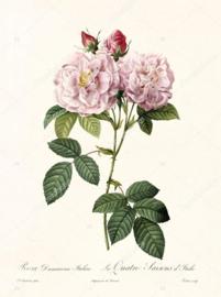Print Damascena Italica- La Quatre Saisons d'Italie