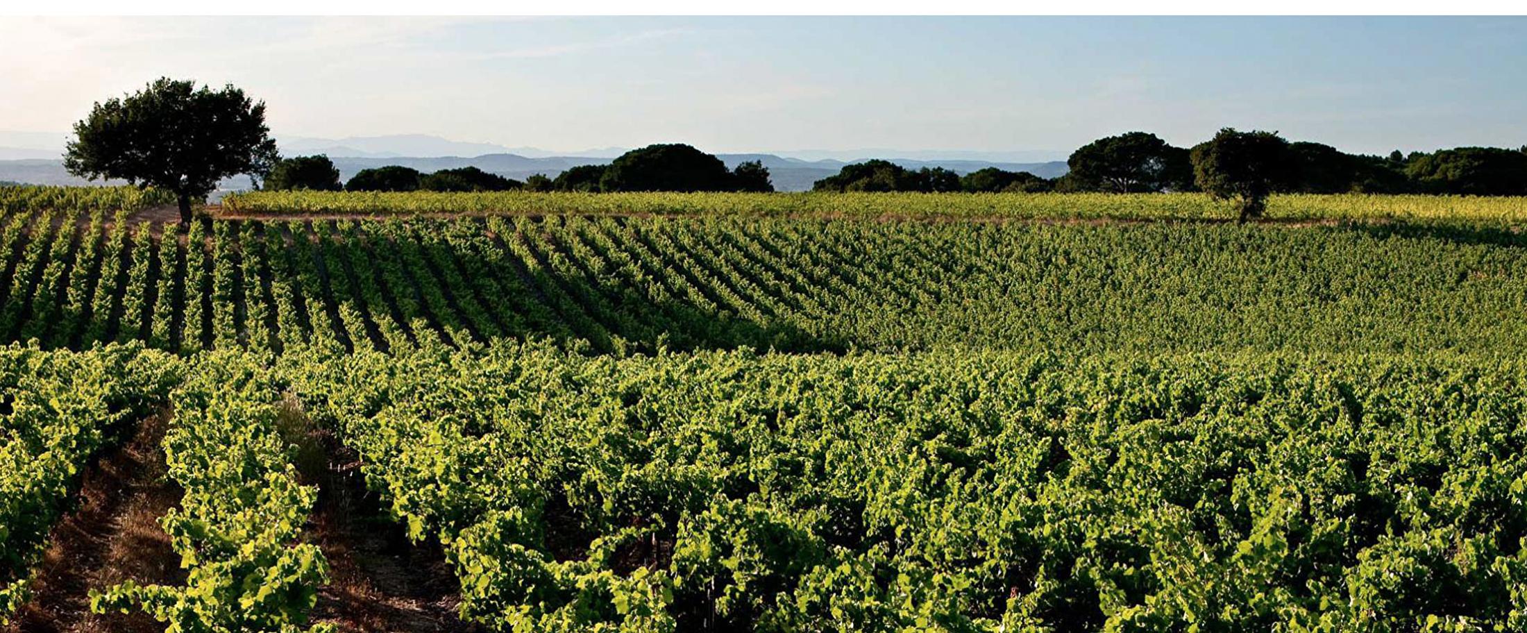 Vino Linea Directa_wijnregio