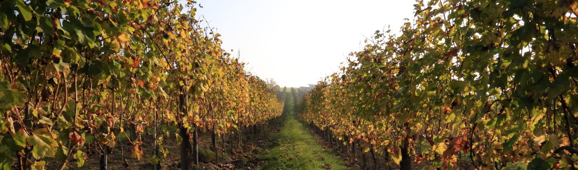 Vino Linea Directa_Wijnhuis_Montemagno