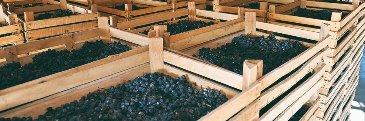 drogen druiven