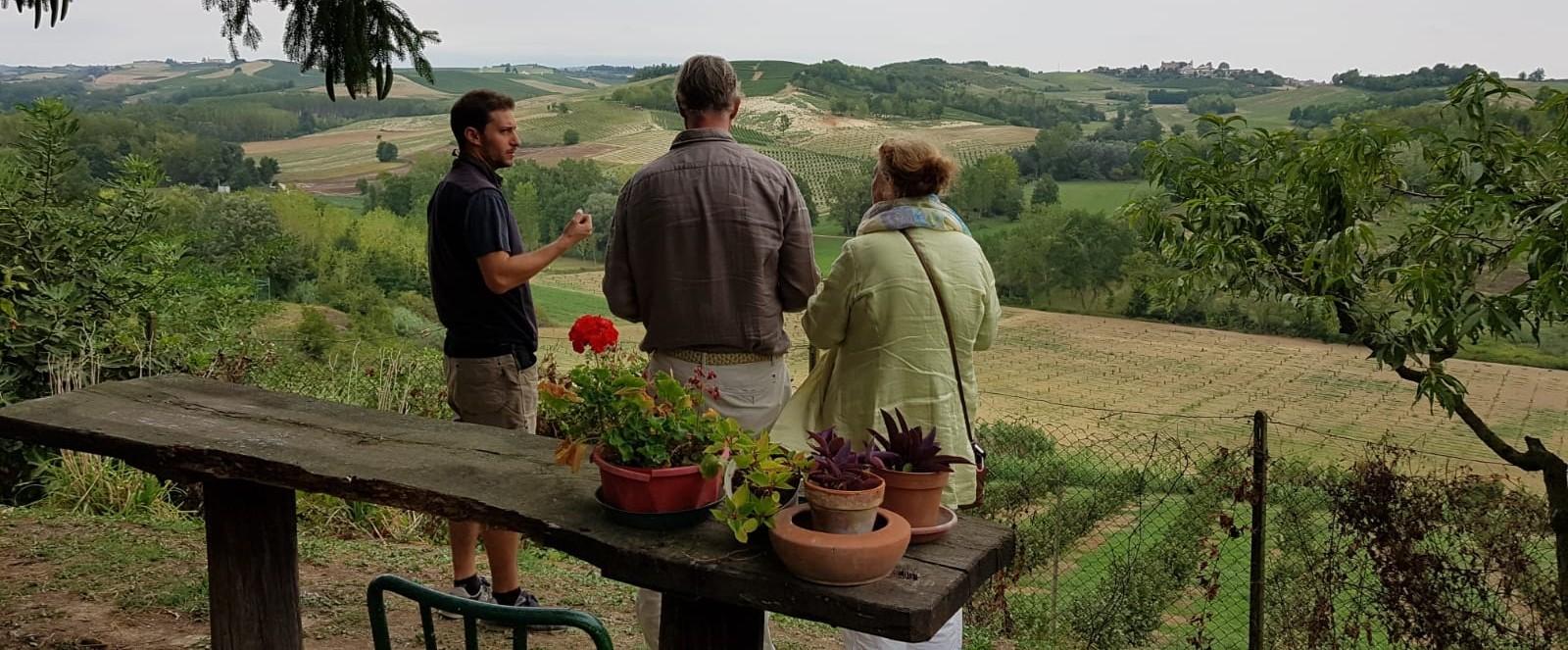 Bosco wijnvelden