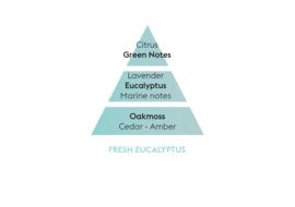 Fraîcheur d'Eucalyptus / Fresh Eucalyptus