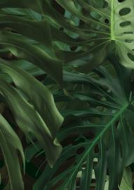 Patroonbehang Monstera Leaves - 97,4 x 280 cm - KEK Amsterdam