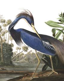Behangpaneel Louisiana Heron - 142,5 x 180 cm - KEK Amsterdam