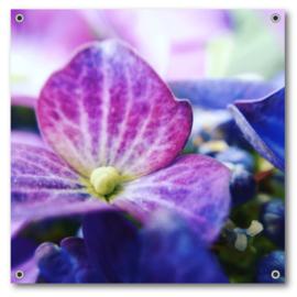 Tuinposter | Hortensia