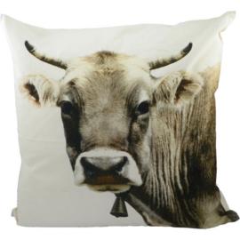 Canvas kussen Zwitserse koe