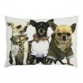 Canvas kussen chihuahuas
