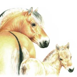 Eindelijk een een kaarten met paarden, Fjordenpaarden wel te verstaan