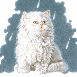 It's raining cat's - Persische kat